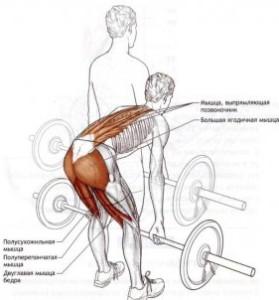 Какие мышцы должны работать при наклонах